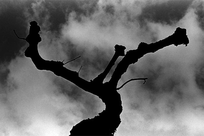 misc_tree
